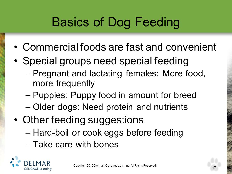 17 Copyright 2010 Delmar, Cengage Learning. All Rights Reserved. Basics of Dog Feeding Commercial foods are fast and convenient Special groups need sp