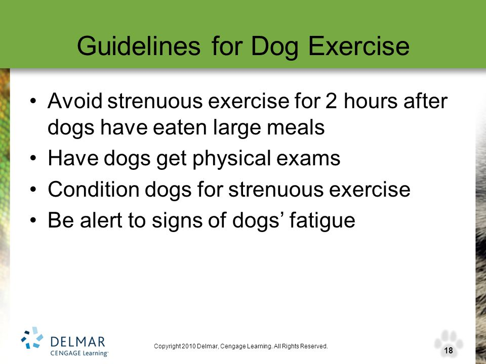 18 Copyright 2010 Delmar, Cengage Learning. All Rights Reserved. Guidelines for Dog Exercise Avoid strenuous exercise for 2 hours after dogs have eate
