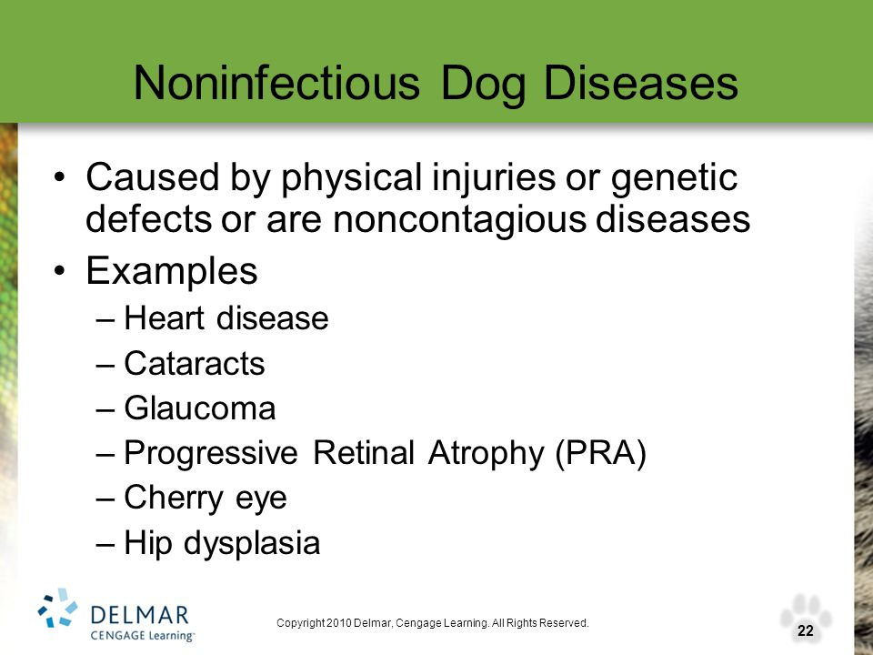 22 Copyright 2010 Delmar, Cengage Learning. All Rights Reserved. Noninfectious Dog Diseases Caused by physical injuries or genetic defects or are nonc
