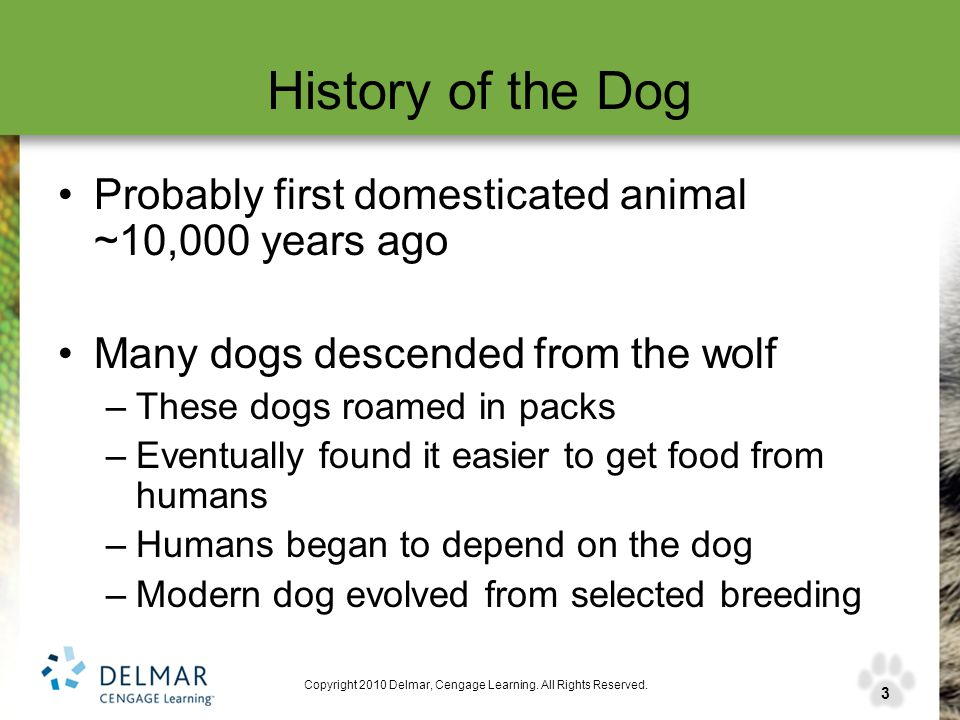 3 Copyright 2010 Delmar, Cengage Learning. All Rights Reserved. History of the Dog Probably first domesticated animal ~10,000 years ago Many dogs desc