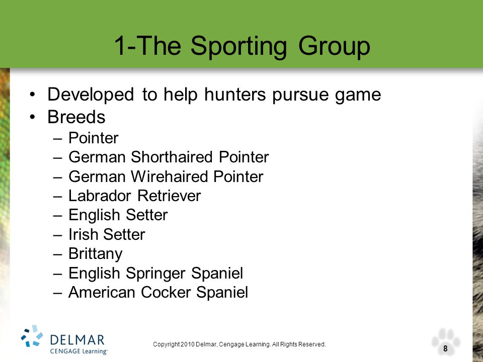 8 Copyright 2010 Delmar, Cengage Learning. All Rights Reserved. 1-The Sporting Group Developed to help hunters pursue game Breeds –Pointer –German Sho
