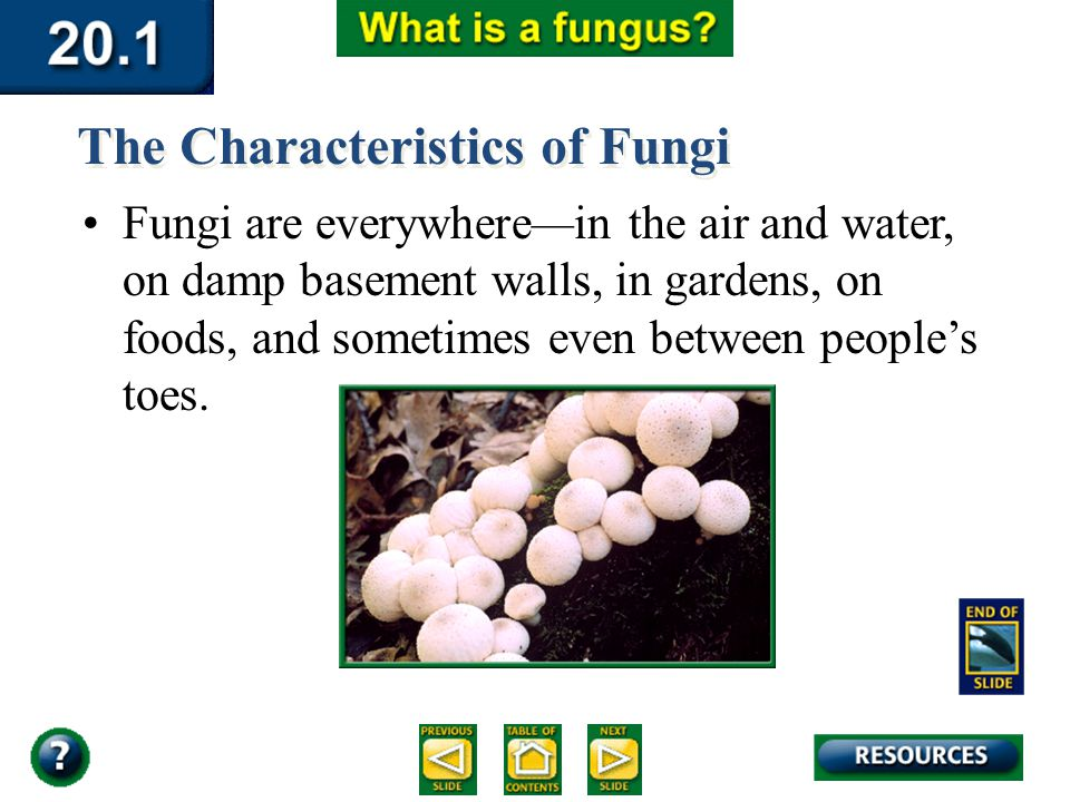 Section 20.1 Summary – pages 529-534 Fungi are everywhere—in the air and water, on damp basement walls, in gardens, on foods, and sometimes even betwe