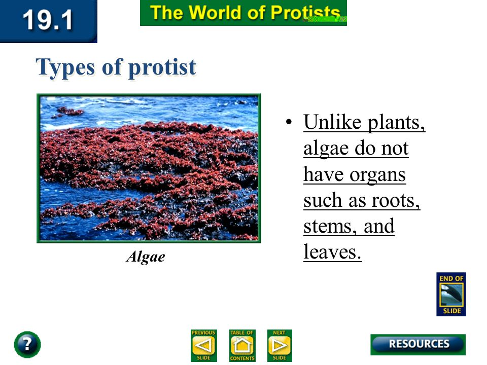 Section 19.1 Summary – pages 503-509 Algae Unlike plants, algae do not have organs such as roots, stems, and leaves. Types of protist