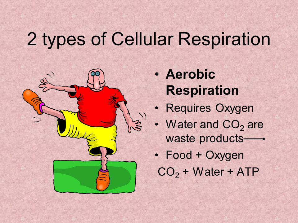 2 types of Cellular Respiration Aerobic Respiration Requires Oxygen Water and CO 2 are waste products Food + Oxygen CO 2 + Water + ATP