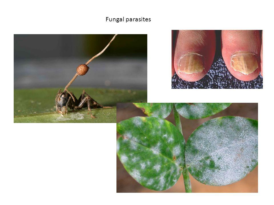Fungal parasites