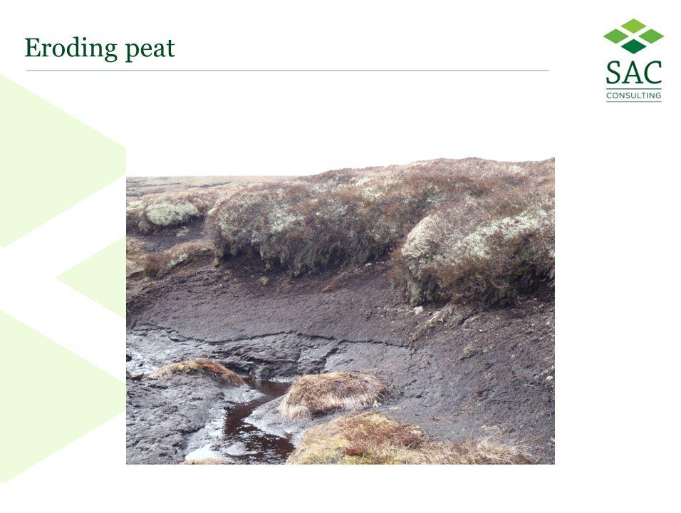 37 Eroding peat