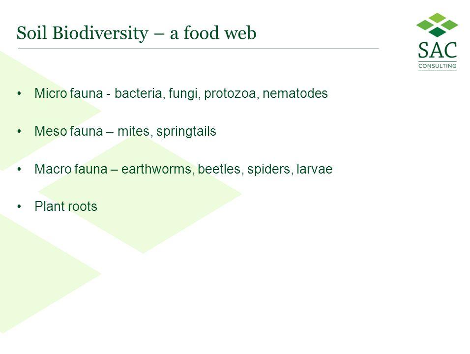 44 Soil Biodiversity – a food web Micro fauna - bacteria, fungi, protozoa, nematodes Meso fauna – mites, springtails Macro fauna – earthworms, beetles, spiders, larvae Plant roots