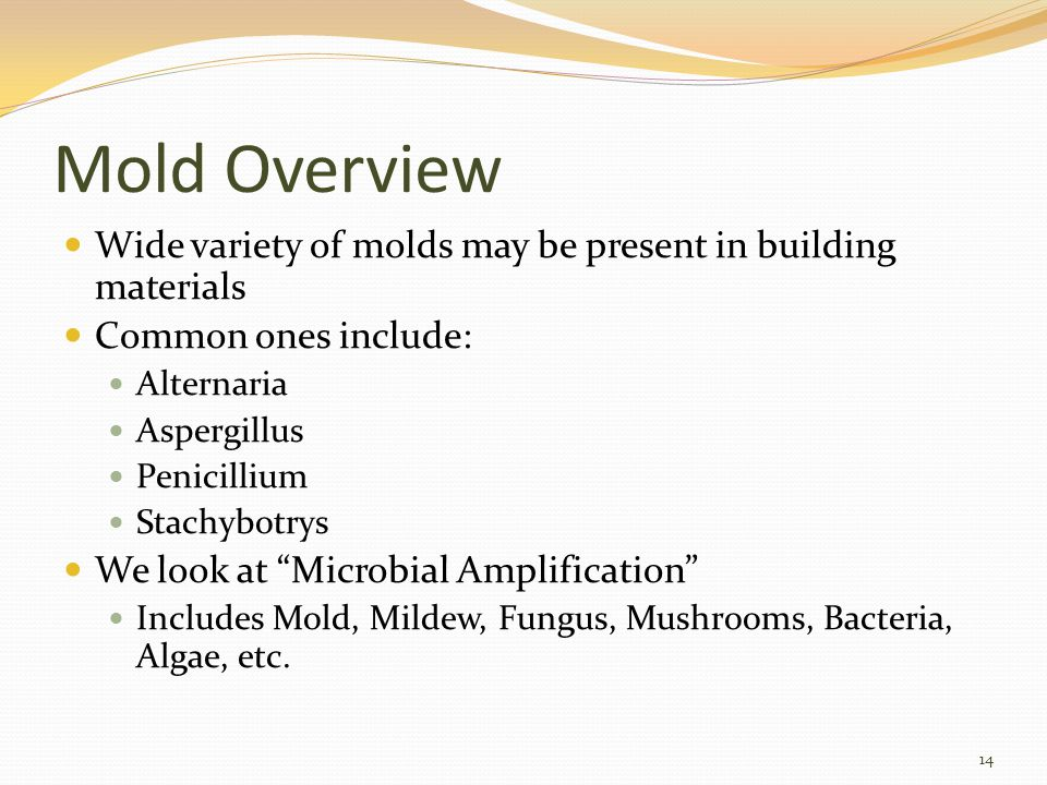 Mold Overview Wide variety of molds may be present in building materials Common ones include: Alternaria Aspergillus Penicillium Stachybotrys We look at Microbial Amplification Includes Mold, Mildew, Fungus, Mushrooms, Bacteria, Algae, etc.