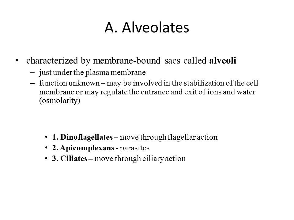A. Alveolates characterized by membrane-bound sacs called alveoli – just under the plasma membrane – function unknown – may be involved in the stabili
