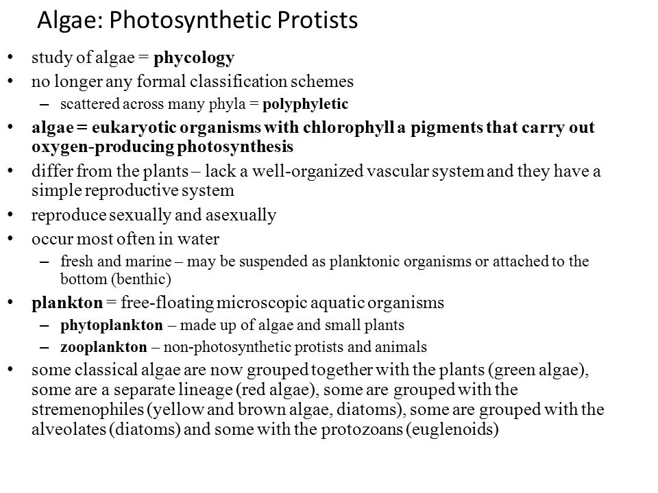 Algae: Photosynthetic Protists study of algae = phycology no longer any formal classification schemes – scattered across many phyla = polyphyletic alg