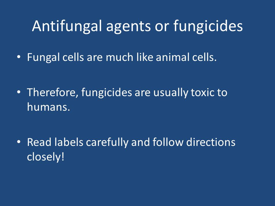 Antifungal agents or fungicides Fungal cells are much like animal cells.