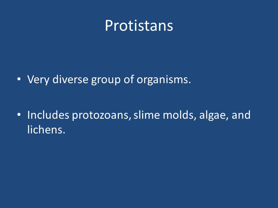 Protistans Very diverse group of organisms. Includes protozoans, slime molds, algae, and lichens.