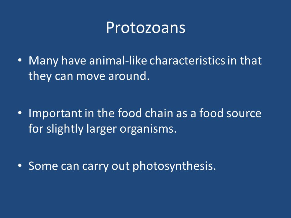 Protozoans Many have animal-like characteristics in that they can move around.