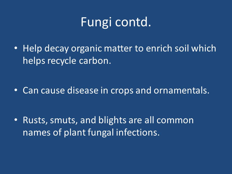 Fungi contd. Help decay organic matter to enrich soil which helps recycle carbon.
