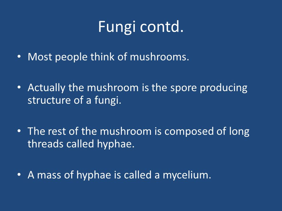 Fungi contd. Most people think of mushrooms.