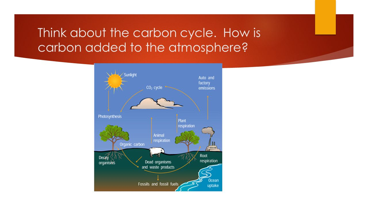 Think about the carbon cycle. How is carbon added to the atmosphere?