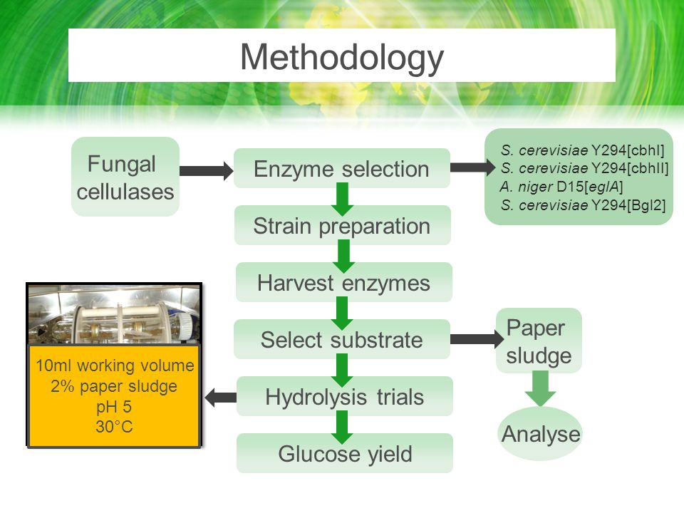 Methodology Enzyme selection Strain preparation Harvest enzymes Select substrate Hydrolysis trials Glucose yield Fungal cellulases Paper sludge Analys