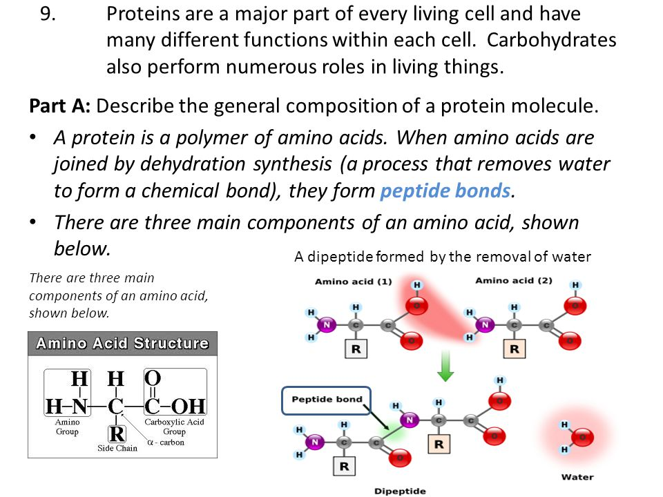 9.Proteins are a major part of every living cell and have many different functions within each cell. Carbohydrates also perform numerous roles in livi