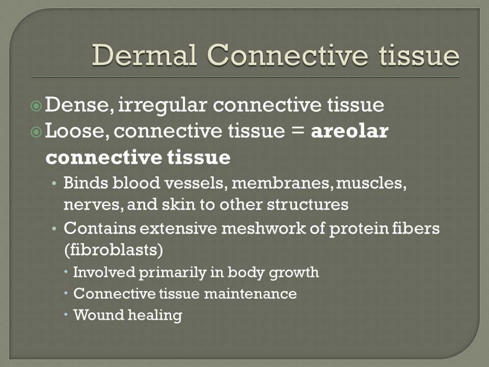  Dense, irregular connective tissue  Loose, connective tissue = areolar connective tissue Binds blood vessels, membranes, muscles, nerves, and skin