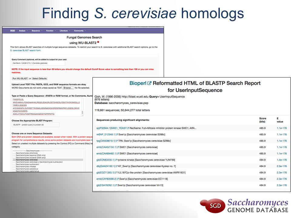 Finding S. cerevisiae homologs