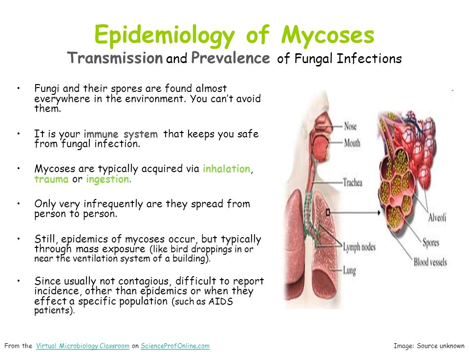 Epidemiology of Mycoses Transmission and Prevalence of Fungal Infections Fungi and their spores are found almost everywhere in the environment.