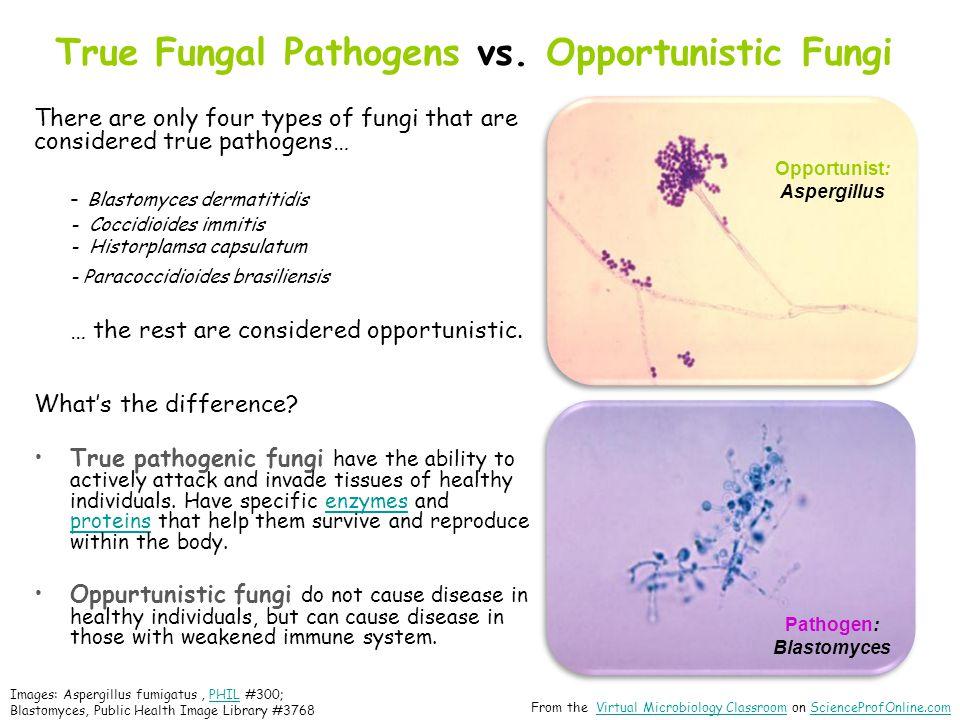 True Fungal Pathogens vs.