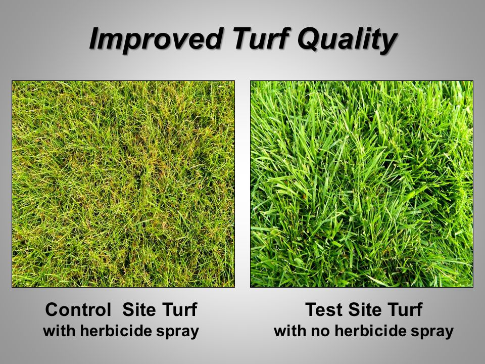 Improved Turf Quality Control Site Turf with herbicide spray Test Site Turf with no herbicide spray