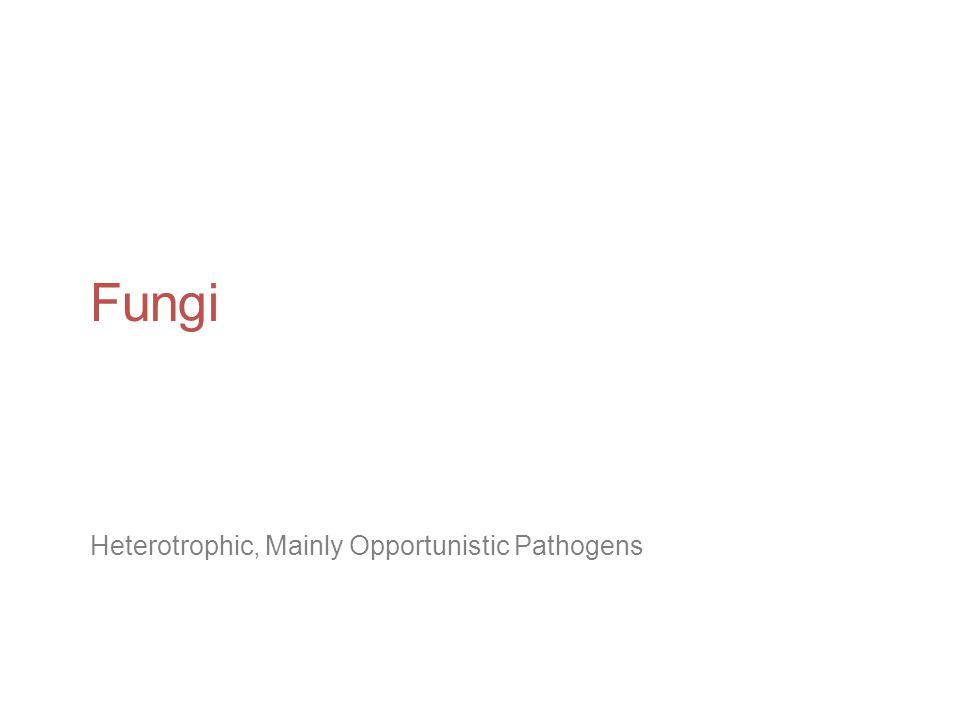 Fungi Heterotrophic, Mainly Opportunistic Pathogens