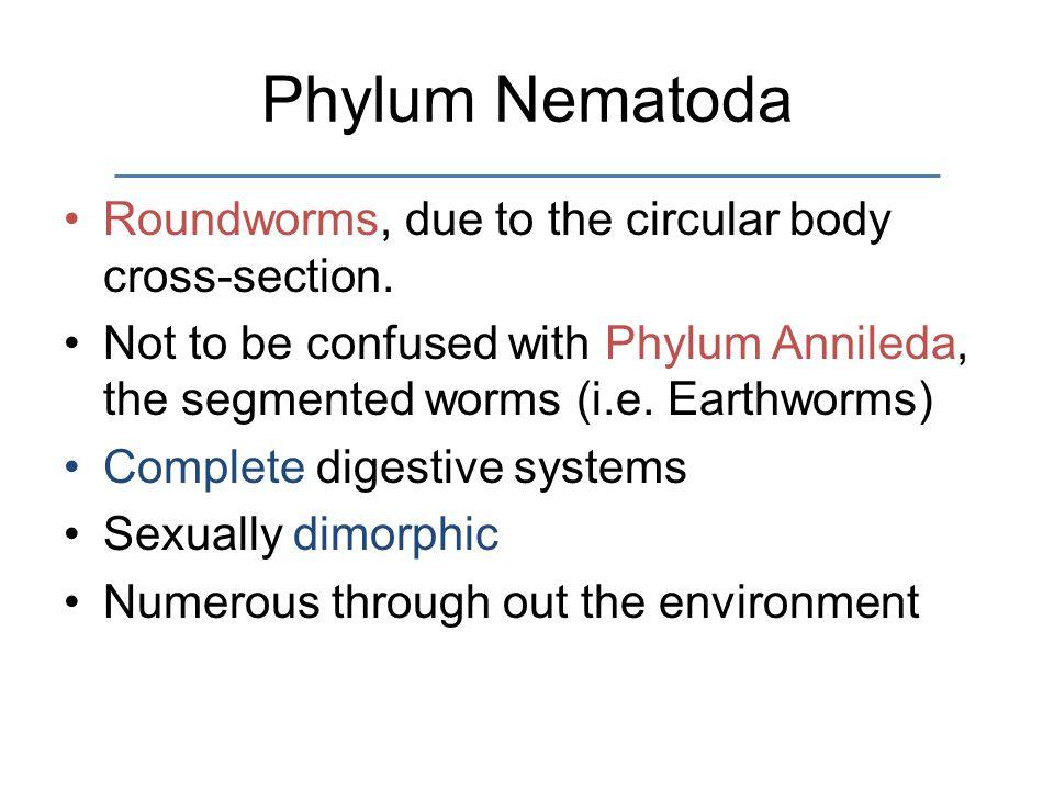 Phylum Nematoda Roundworms, due to the circular body cross-section.