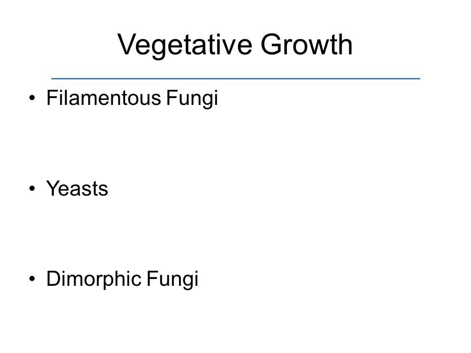 Vegetative Growth Filamentous Fungi Yeasts Dimorphic Fungi