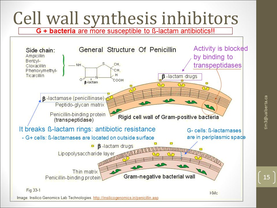 Cell wall synthesis inhibitors 15 tim3@ualberta.ca Image: Insilico Genomics Lab Technologies.