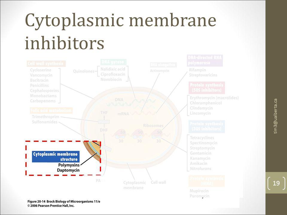 Cytoplasmic membrane inhibitors 19 tim3@ualberta.ca