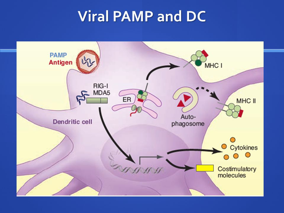 Viral PAMP and DC
