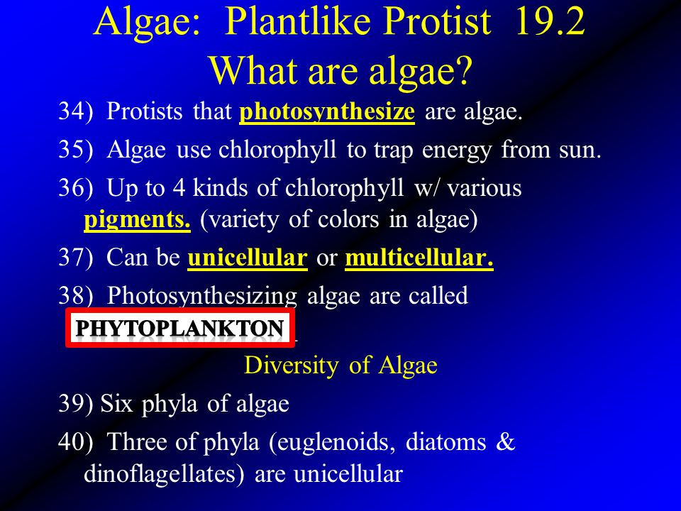 Algae: Plantlike Protist 19.2 What are algae? 34) Protists that photosynthesize are algae. 35) Algae use chlorophyll to trap energy from sun. 36) Up t