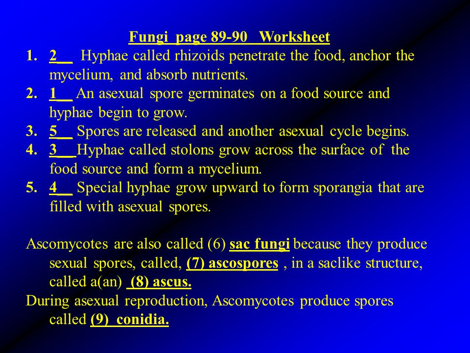 Fungi page 89-90 Worksheet 1.2__ Hyphae called rhizoids penetrate the food, anchor the mycelium, and absorb nutrients. 2.1__ An asexual spore germinat