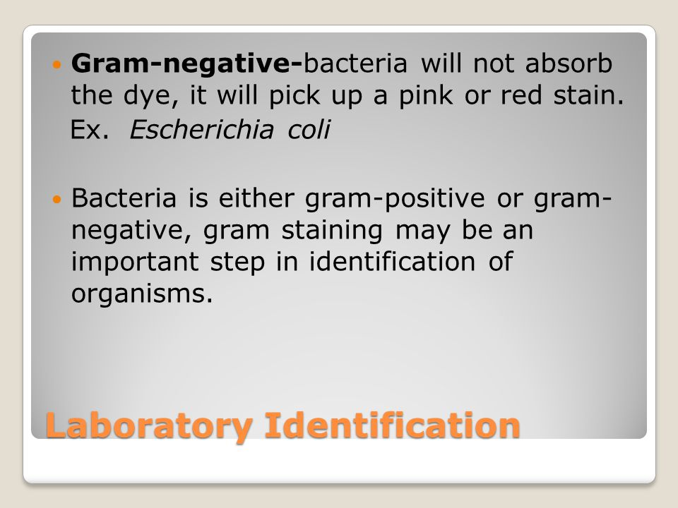 Laboratory Identification Gram-negative-bacteria will not absorb the dye, it will pick up a pink or red stain. Ex. Escherichia coli Bacteria is either