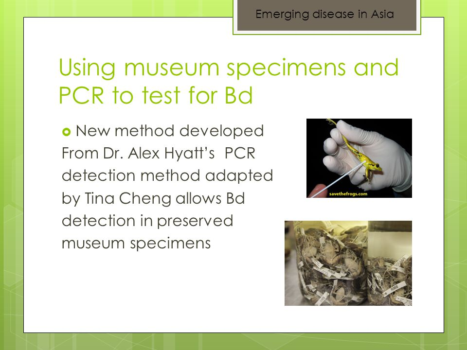 Using museum specimens and PCR to test for Bd  New method developed From Dr.
