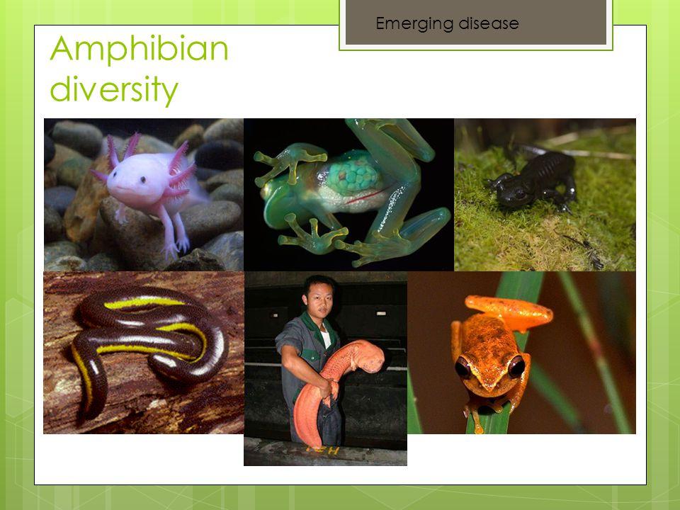 Amphibian diversity Emerging disease