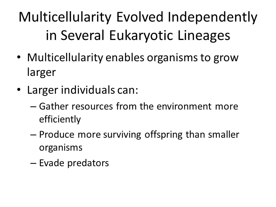 Multicellularity Evolved Independently in Several Eukaryotic Lineages Multicellularity enables organisms to grow larger Larger individuals can: – Gath