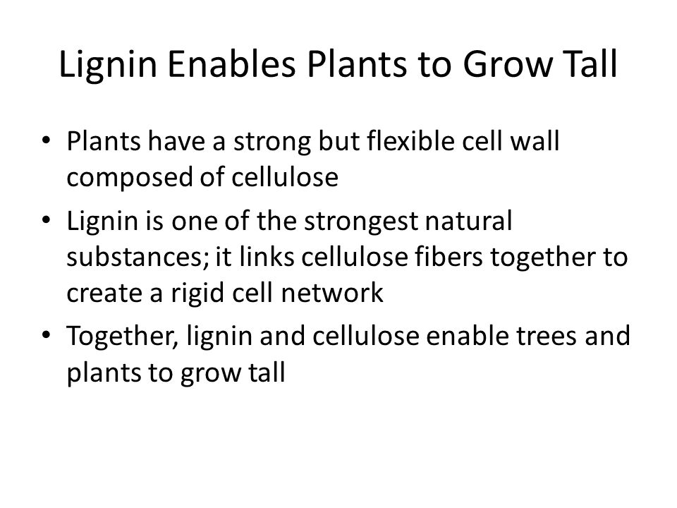 Lignin Enables Plants to Grow Tall Plants have a strong but flexible cell wall composed of cellulose Lignin is one of the strongest natural substances