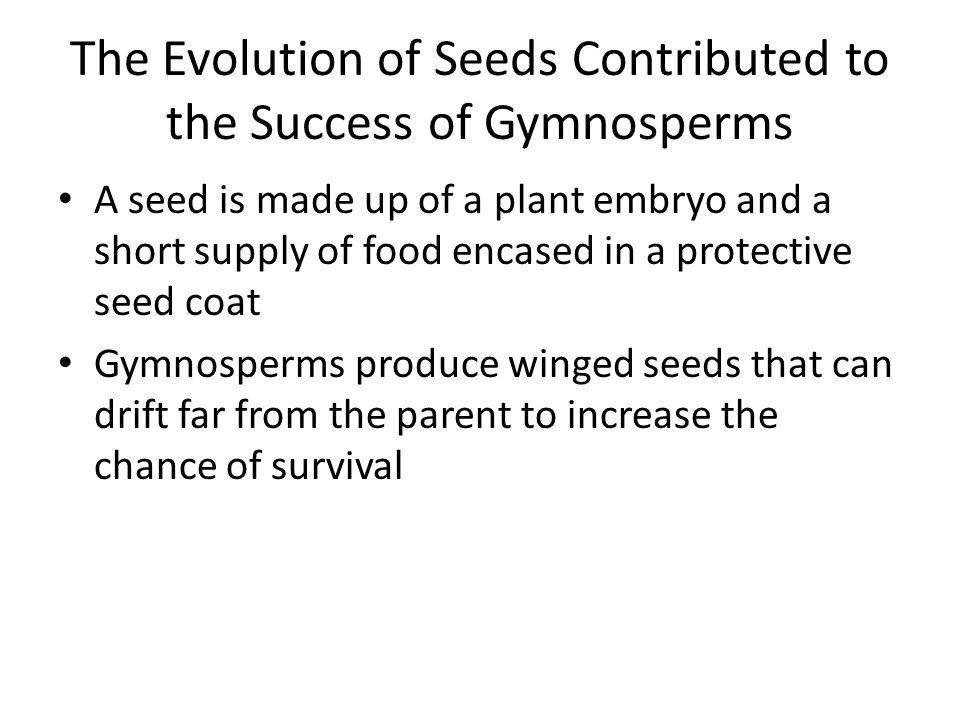 The Evolution of Seeds Contributed to the Success of Gymnosperms A seed is made up of a plant embryo and a short supply of food encased in a protectiv