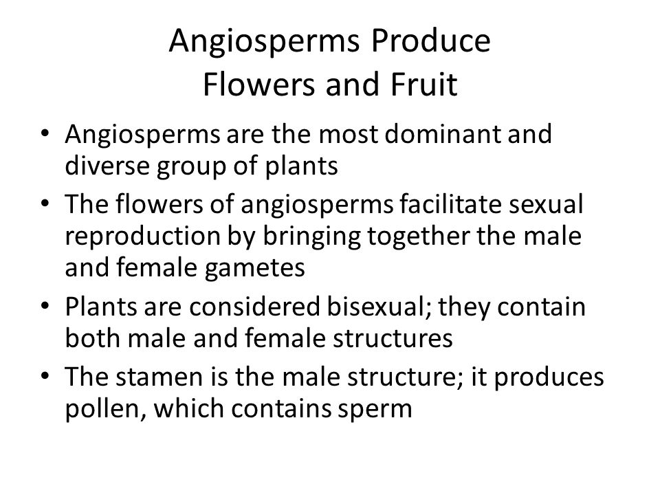 Angiosperms Produce Flowers and Fruit Angiosperms are the most dominant and diverse group of plants The flowers of angiosperms facilitate sexual repro