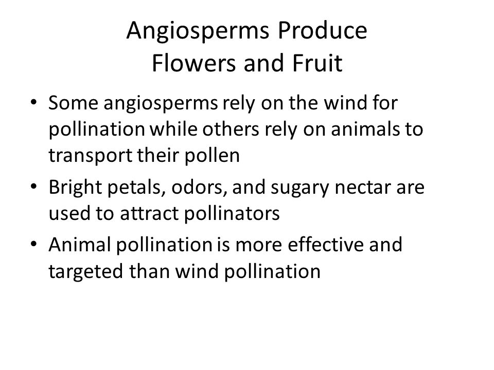 Angiosperms Produce Flowers and Fruit Some angiosperms rely on the wind for pollination while others rely on animals to transport their pollen Bright
