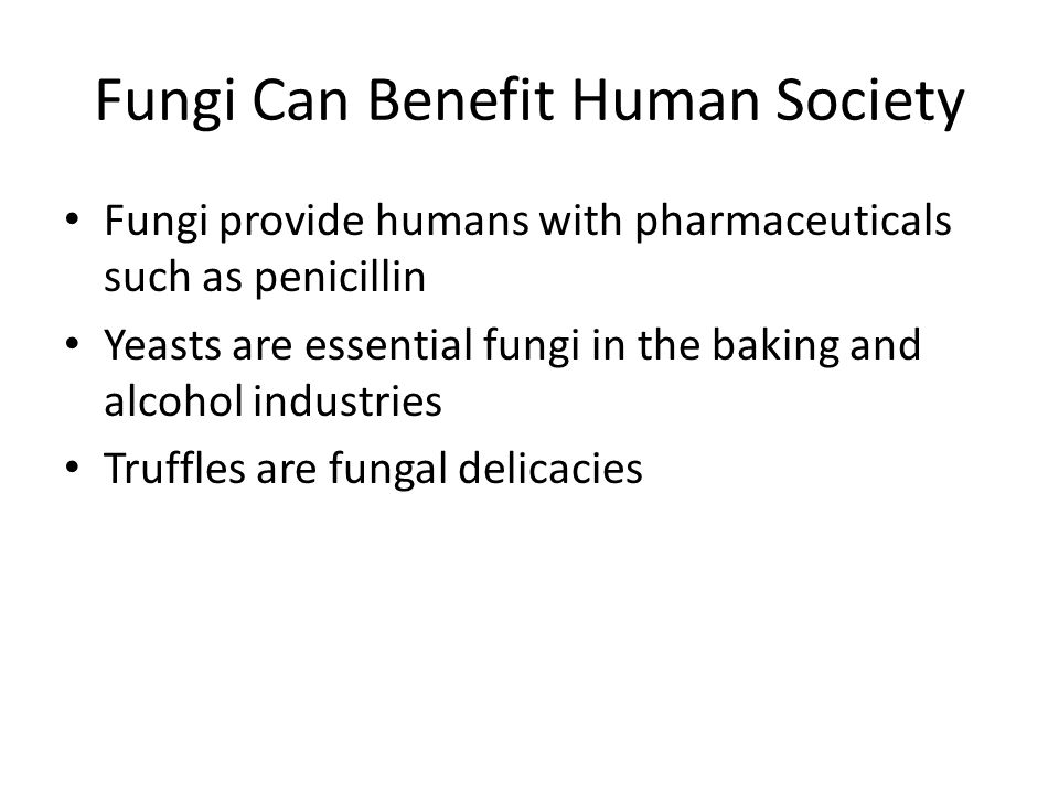 Fungi Can Benefit Human Society Fungi provide humans with pharmaceuticals such as penicillin Yeasts are essential fungi in the baking and alcohol indu