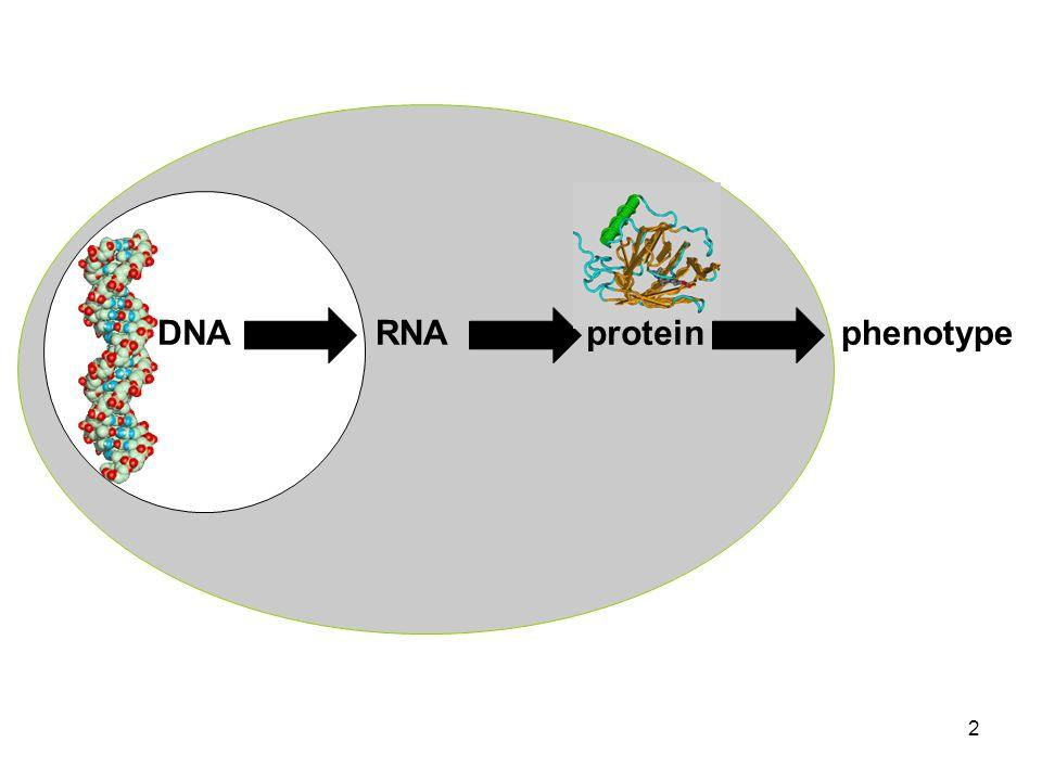 2 DNARNAphenotypeprotein