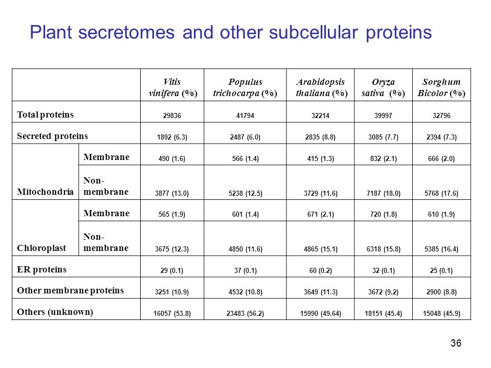 36 Plant secretomes and other subcellular proteins Vitis vinifera (%) Populus trichocarpa (%) Arabidopsis thaliana (%) Oryza sativa (%) Sorghum Bicolor (%) Total proteins 2983641794322143999732796 Secreted proteins 1892 (6.3)2487 (6.0)2835 (8.8)3085 (7.7)2394 (7.3) Mitochondria Membrane 490 (1.6)566 (1.4)415 (1.3)832 (2.1)666 (2.0) Non- membrane 3877 (13.0)5238 (12.5)3729 (11.6)7187 (18.0)5768 (17.6) Chloroplast Membrane 565 (1.9)601 (1.4)671 (2.1)720 (1.8)610 (1.9) Non- membrane 3675 (12.3)4850 (11.6)4865 (15.1)6318 (15.8)5385 (16.4) ER proteins 29 (0.1)37 (0.1)60 (0.2)32 (0.1)25 (0.1) Other membrane proteins 3251 (10.9)4532 (10.8)3649 (11.3)3672 (9.2)2900 (8.8) Others (unknown) 16057 (53.8)23483 (56.2)15990 (49.64)18151 (45.4)15048 (45.9)