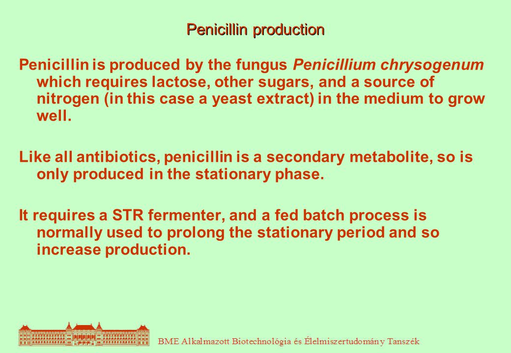 Penicillin production Penicillin is produced by the fungus Penicillium chrysogenum which requires lactose, other sugars, and a source of nitrogen (in