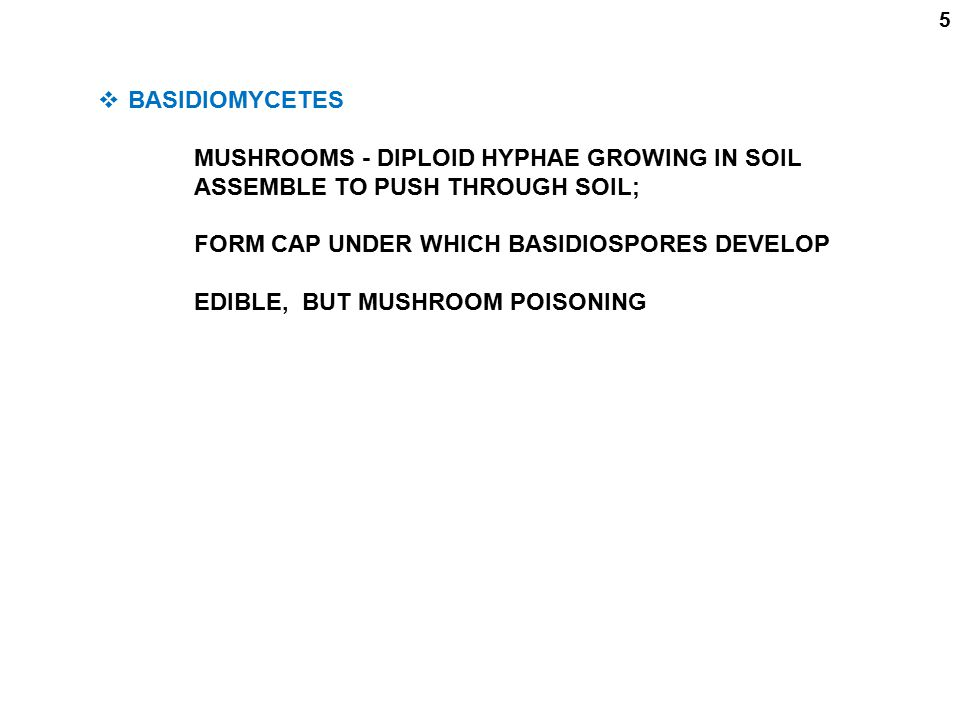 5  BASIDIOMYCETES MUSHROOMS - DIPLOID HYPHAE GROWING IN SOIL ASSEMBLE TO PUSH THROUGH SOIL; FORM CAP UNDER WHICH BASIDIOSPORES DEVELOP EDIBLE, BUT MU