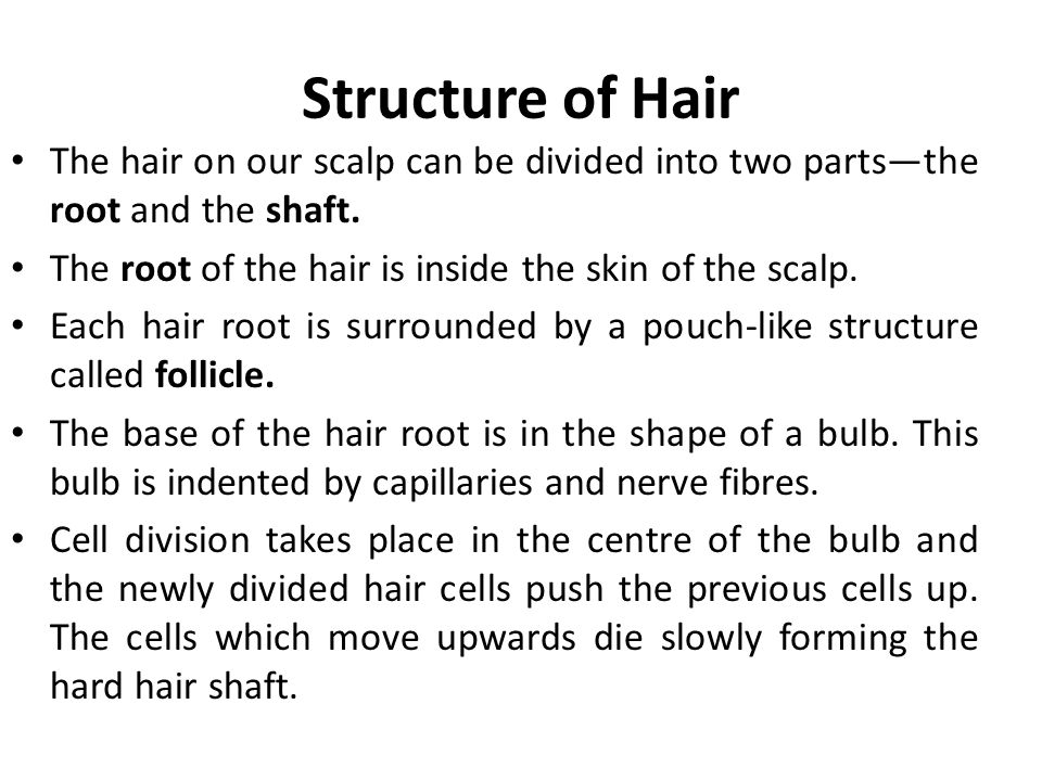 Hair follicle Hair follicle is a small, curved pit buried deep in the fat of the scalp and is the point from which the hair grows.