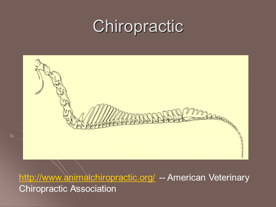 Chiropractic http://www.animalchiropractic.org/http://www.animalchiropractic.org/ -- American Veterinary Chiropractic Association